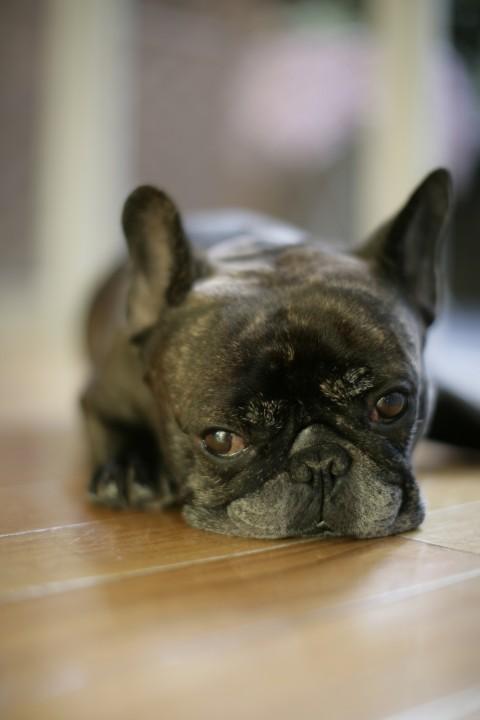 oppor-dog.com