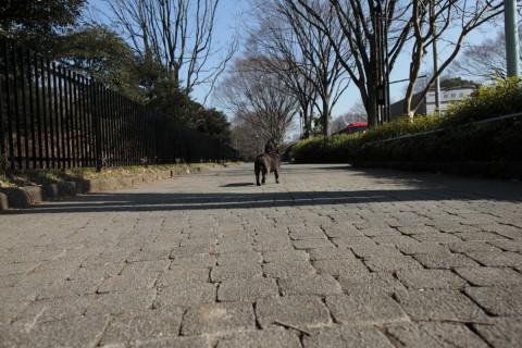 サッサと歩きます。